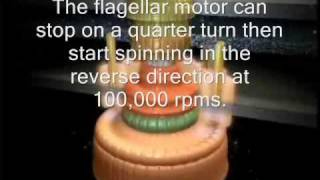 The Flagellar Motor - By Design or By Chance.wmv