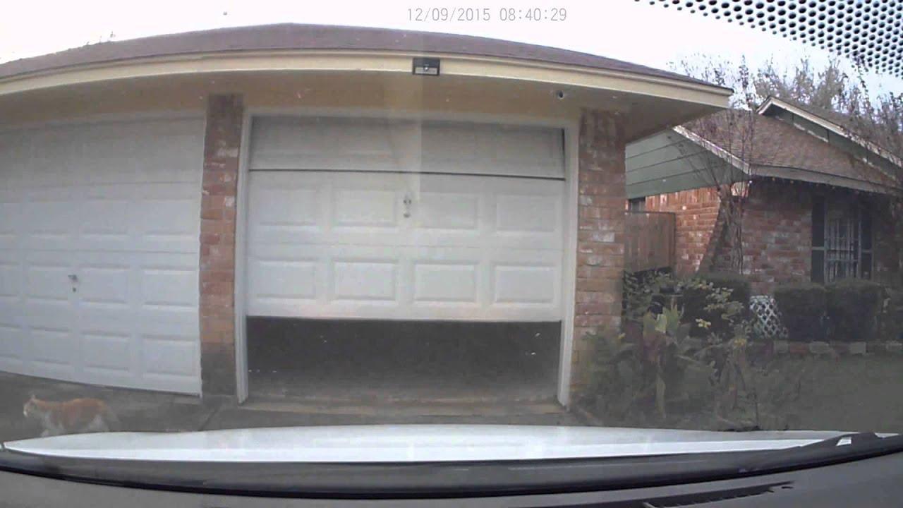 Slo Mo Cat Under Garage Door Youtube