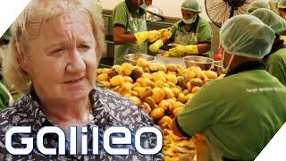 Download Mp3 70 Mio.€/jahr - Der Bio-obst Millionär | Galileo | Prosieben