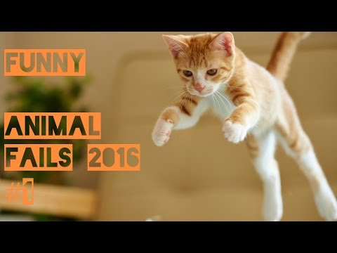 Funny Animal Fail Compilation 2016 #1