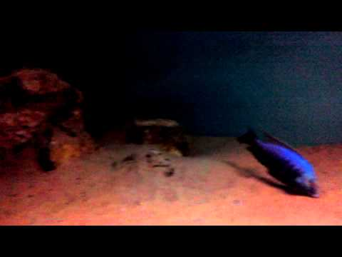 Aquarium 500l Cichlides Malawi