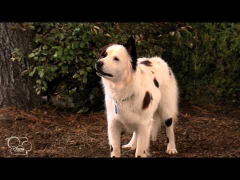 Dog With A Blog - Stan Runs Away