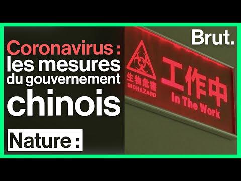 Coronavirus : Une Transmission Par Les Animaux