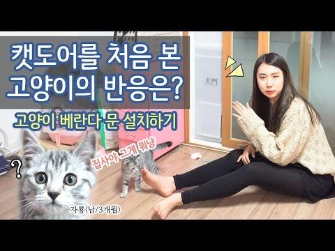 [샒의삶] 캣도어를 처음 본 고양이 자룡이의 반응은? 고양이 베란다 이동문 설치하기!