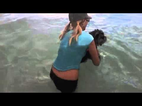 How To Properly Throw Puppies Into The River Girl Throws Puppies In