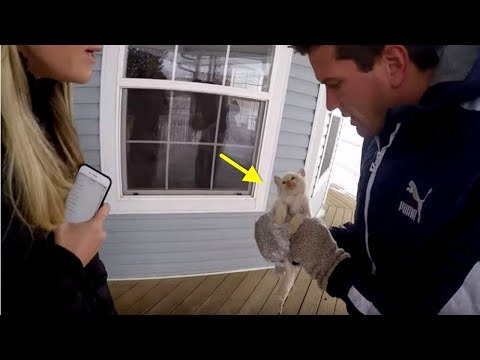 Man Finds A Kitten Frozen Solid In A Snowstorm And Attempts To Pull Off A Miracle