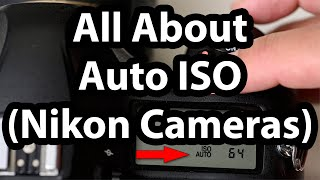 All About Auto ISO (Nikon Cameras)