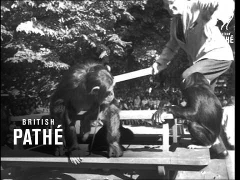 Chimps Tea Party At London Zoo YouTube - Children's birthday party london zoo