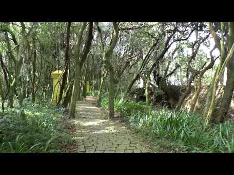 Conheça Curitiba PR - Bosque de Portugal