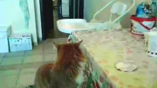 Кот vs сметана☺
