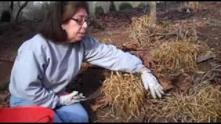 Gardening tips: Japanese Forest Grass