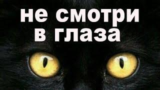 Почему нельзя смотреть кошкам в глаза ответы видео паразительно факты