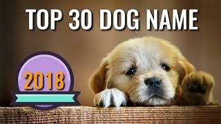 Top Dog Names | Top 30 Dog Name 2018 | Dog Channel | Popular Dog Name | In Hindi | Dog Male  Name