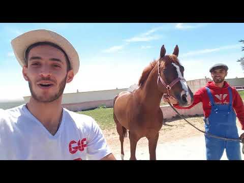 Vlog | Tiaret (part 1: chevaux, cascades)