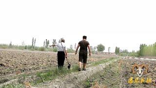 【胖纸哥】都说新疆戈壁大漠连成片 胖纸哥带你看什么叫鱼米之乡!最真實的新疆水稻種植季