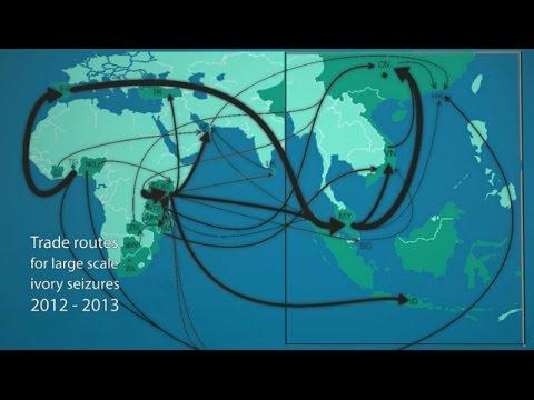 Disrupting the illegal wildlife trade