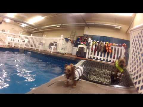 Little-dog swim fun at Alaska K9 Aquatics