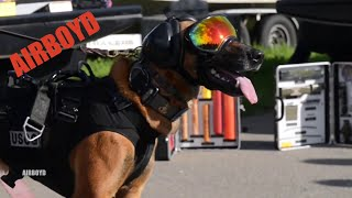 Coast Guard Canine Explosive Detection Hoist