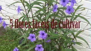 5 Flores Para Quem Não Tem Tempo