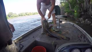 Catch 'em before they spawn - 24 lb flathead