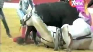 14Clip hít Tai nạn kinh hoàng trong giải đấu bò ở Tây Ban Nha 2016 video giải trí vui cười hài hước