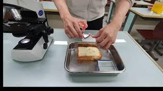 광학현미경으로 곰팡이 관찰하기
