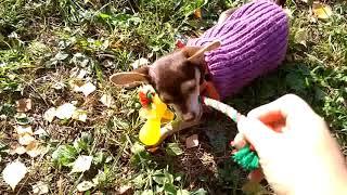 Игрушка для собак Соска с канатом Doglike
