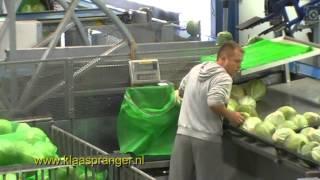 Automatisch kool sorteren met kisten kantelaar, weegband sorteer en kisten vulmachine