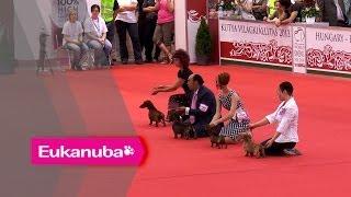 World Dog Show 2013 - Group Iv Judging