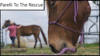 RESCUE HORSES/ PARELLI NATURAL Training TIP
