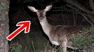 5 Ciervos Zombies REALES Captados en Cámara