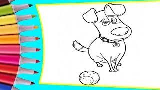 РАСКРАСКИ! Раскрашиваем картинки для детей из мультфильмов Тайная жизнь домашних животных