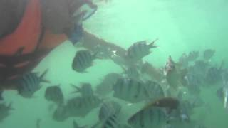 Crazy Fish Attack 3 (Shot By Sony HDR-AS30V) 沙巴浮潛 馬慕迪島