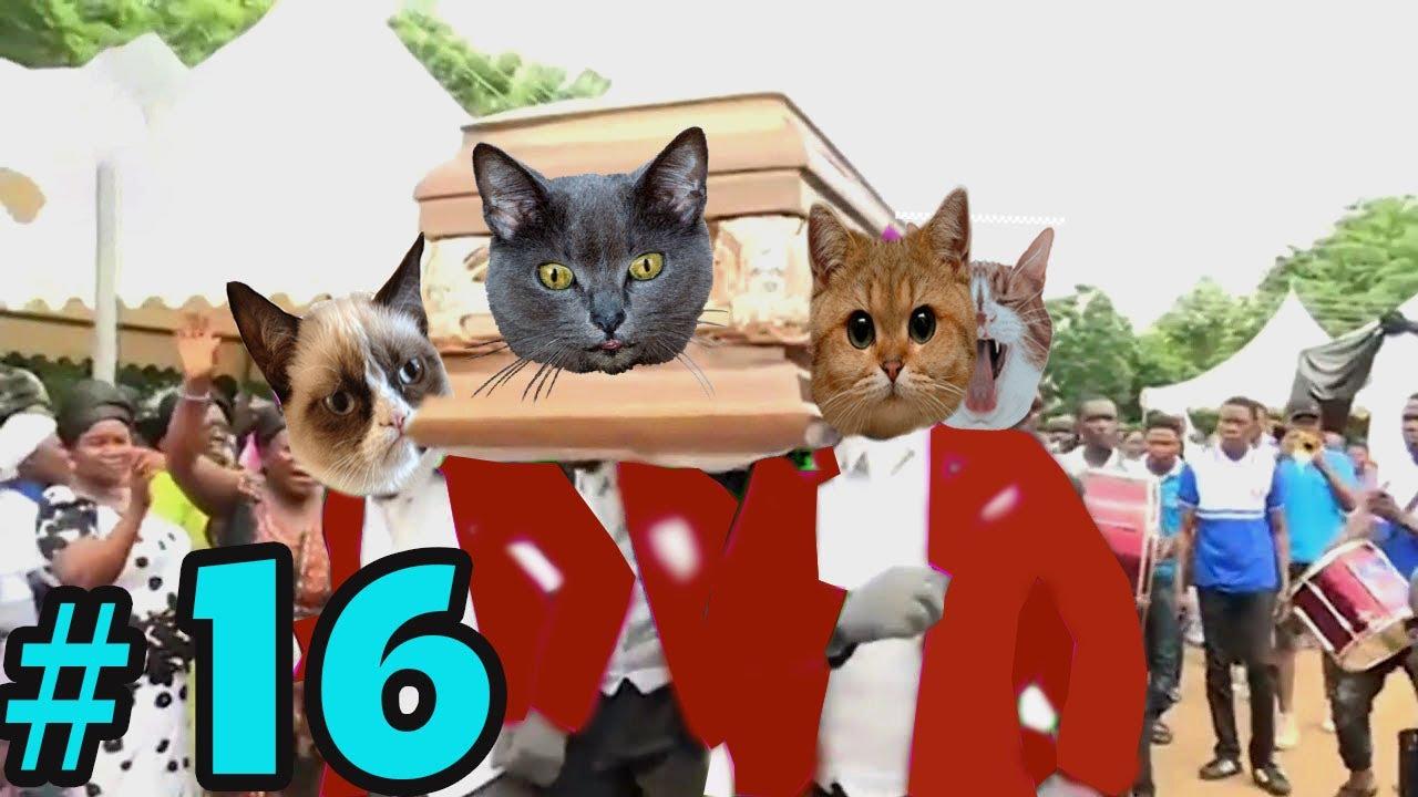 Coffin Dance Meme: Dog and Cat Meme Compilation 2021 #16