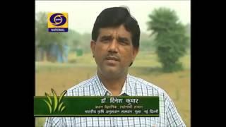 Jaivik Kheti Organic farming 18 05 2015 Dr Dinesh Kumar, Agronomy, IARI, New Delhi