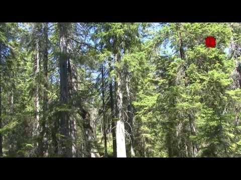 Sweden - Tyresta National Park