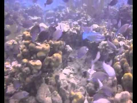 Aquabulle - Bateau à vision sous marine en Martinique