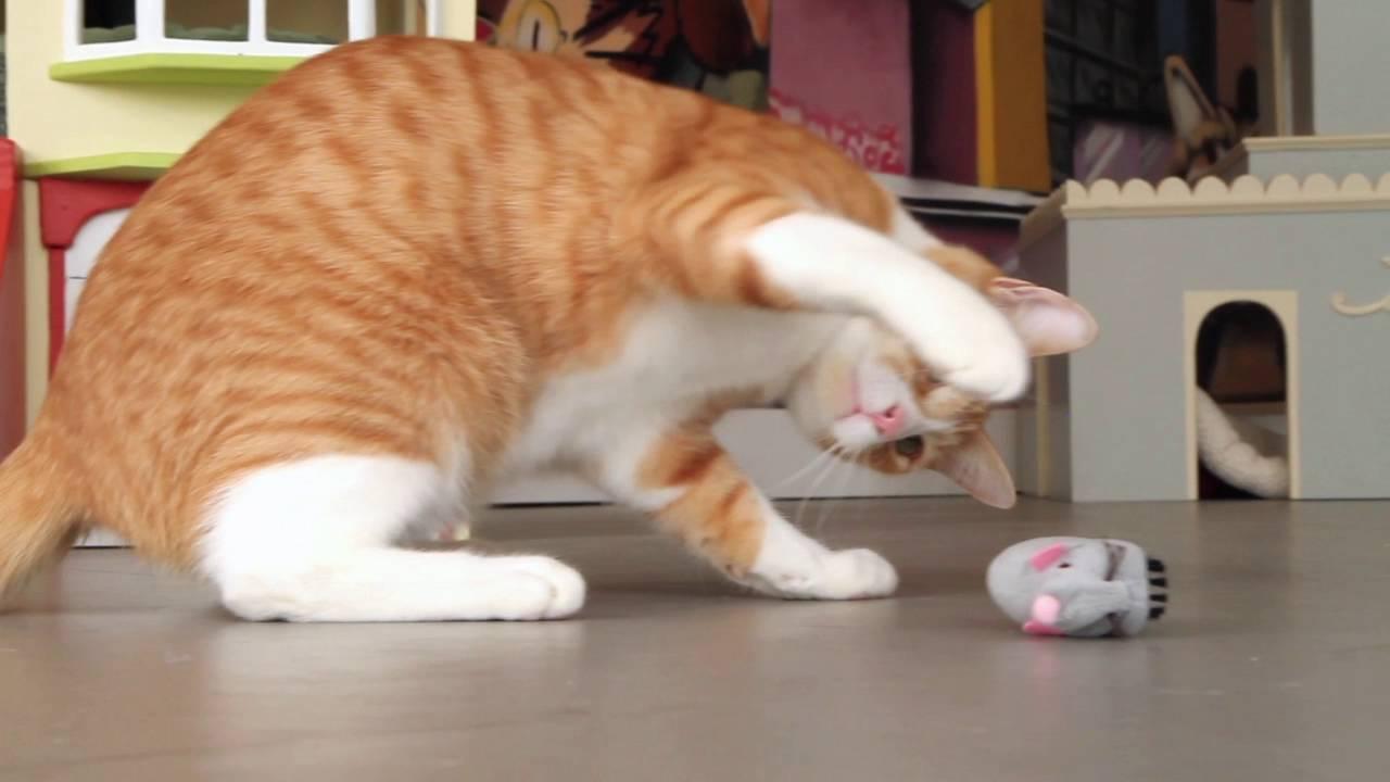Petlinks Roaming Runner Mouse Youtube