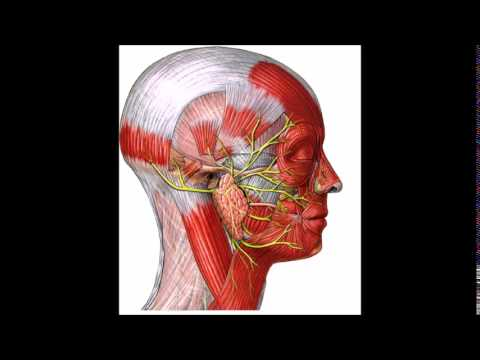 Nervio Facial: Anatomia y Semiologia - YouTube
