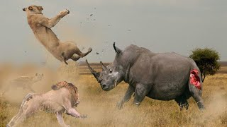 НОСОРОГ В ДЕЛЕ! Носорог против слона, львов, буйвола[Vs]