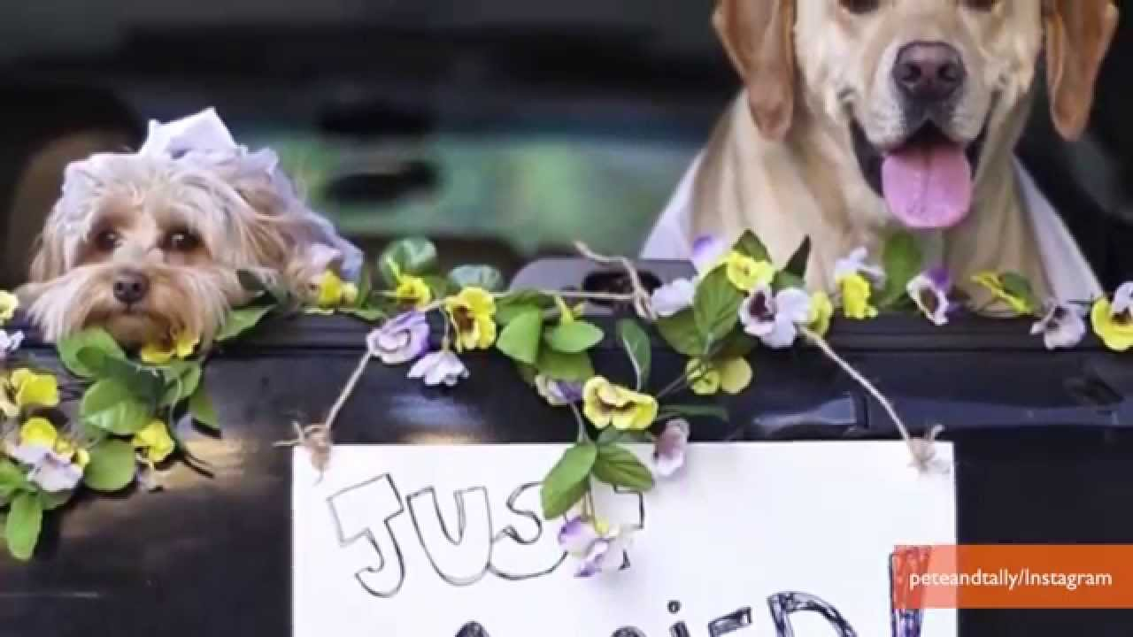 Super Cute Dogs Get Married Youtube