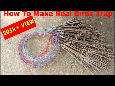 how to make a wild finch trap