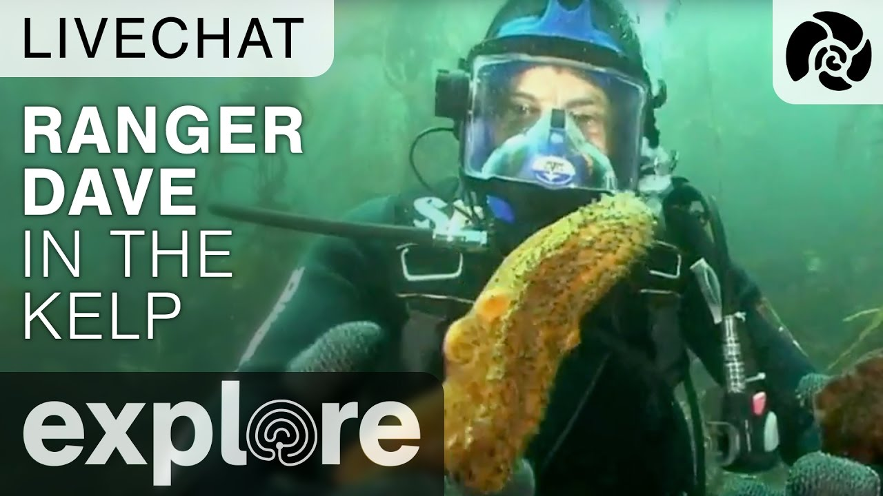 Ranger Dave in the Kelp off the Channel Islands - Underwater Live Chat