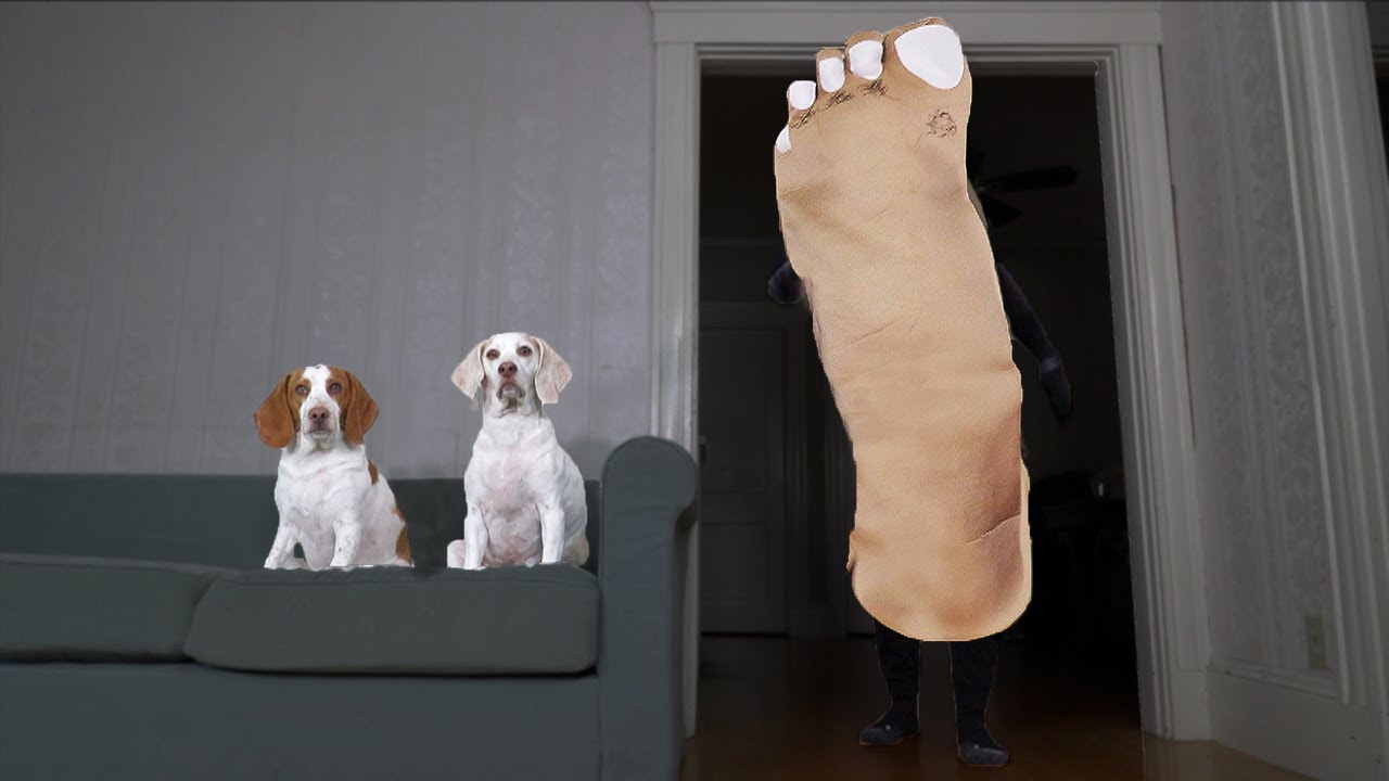 Dog vs Giant Foot Prank: Funny Dogs Maymo & Potpie Get Surprised with Pile of Dirty Sneakers!