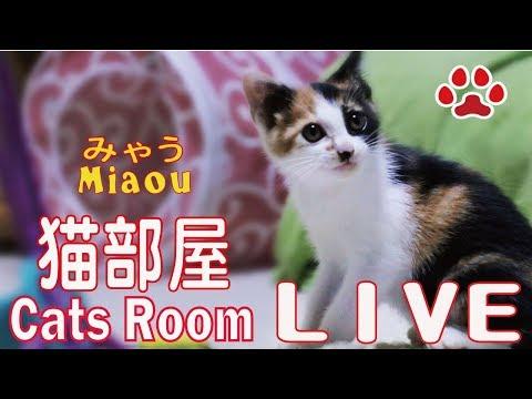 Cats  Kittens room Miaou