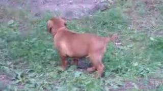This Video Is Unavailable.     Show Ring Training