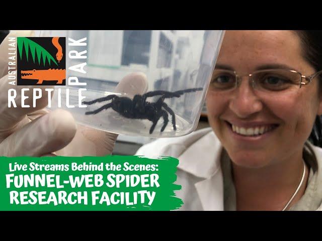 LIVE: FUNNEL-WEB SPIDER PROGRAM TALK | AUSTRALIAN REPTILE PARK
