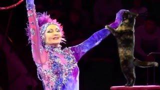 Цирк, Circus Программа Воробьева, кошки Любовь Воробьева