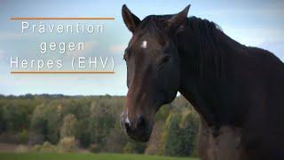 Herpes beim pferd: ehv mit ...