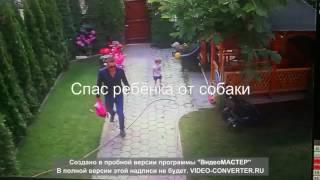 Отец спас ребёнка от собаки